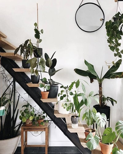 Décorer l'escalier avec des plantes Meubles Bouchiquet Bergues