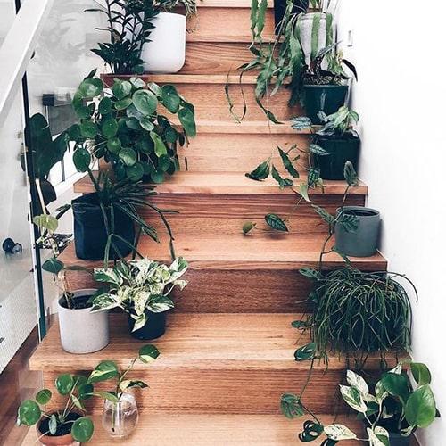 Décorer l'escalier avec plantes Meubles Bouchiquet